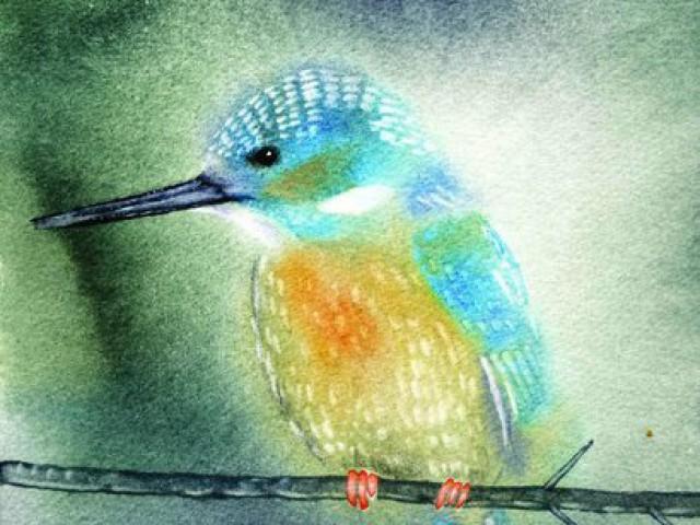 Kingfisher  30/30cm